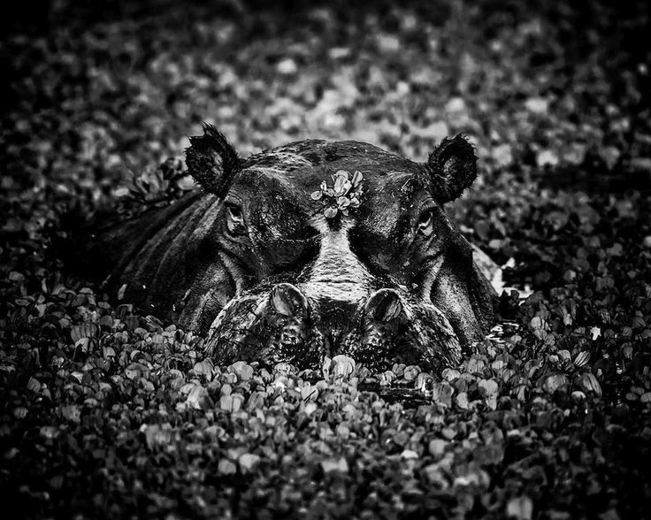 Laurent baheux this french wildlife photographer takes unbelievable black and white photographs from africa