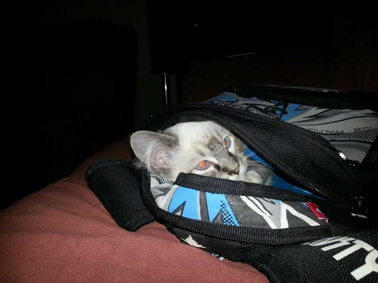 In Et's school bag