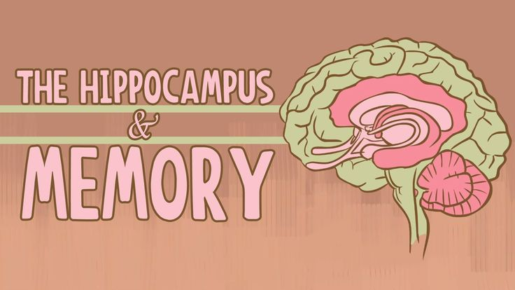 """In the latest TED-Ed animation, """"The Hippocampus and Memory,"""" educator Sam Kean and animator Anton Bogaty explore the function of the hippocampus, the region of the brain named after its resemblanc…"""