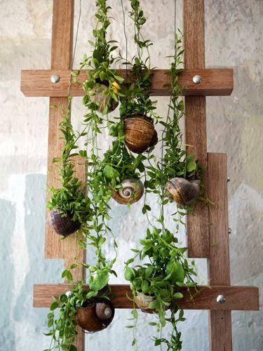 Vertical gardens take your plant collection to the next level (Photo: Opus via Urban Gardens)