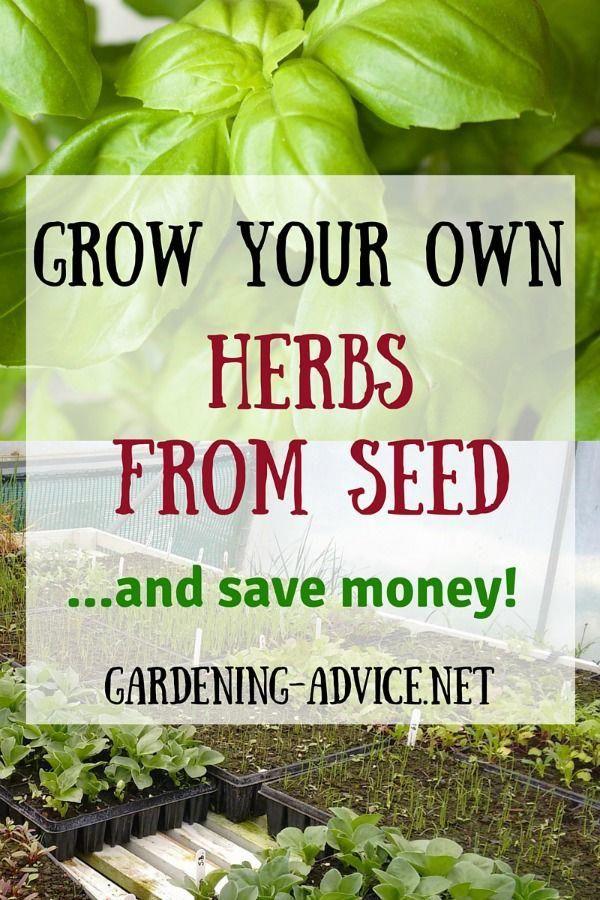 Organic Gardening Encyclopedia Organicgardeningbible