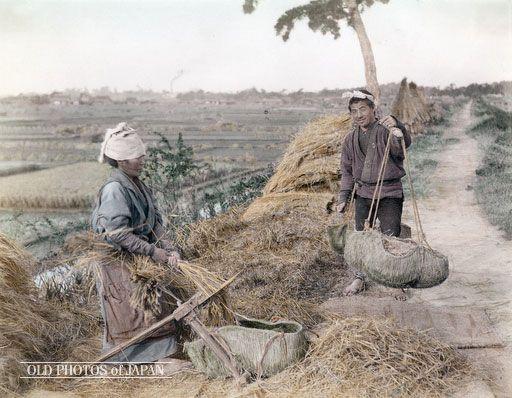 OLD PHOTOS of JAPAN: 脱穀 1890年代