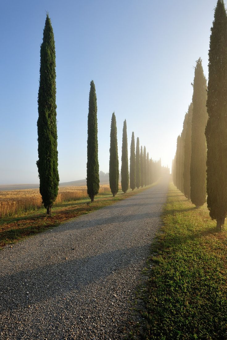 Italian Cypress: Rich, complex and 1 of 21 unique aromatic extracts that created our stunning SENSE collection. Only from #williamroam. Cipressi by Vesna Zivcic  Tuscany, Italy