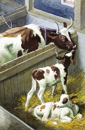Cow and calves. C. F. Tunnicliffe
