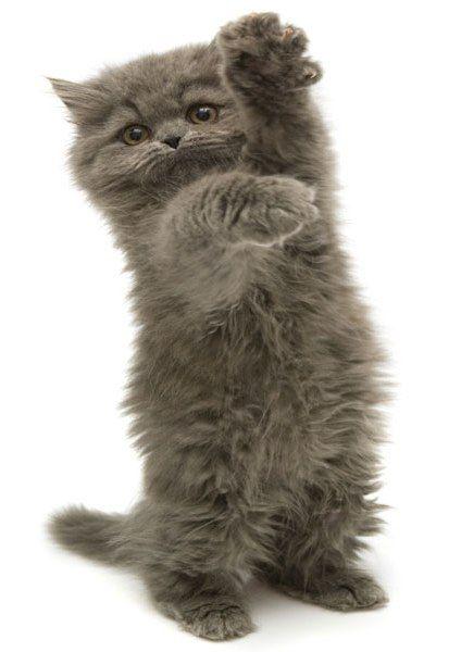 Malattia da graffio del gatto (BARTONELLOSI)