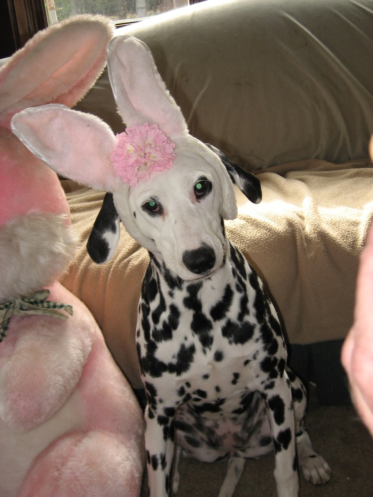 Annie says Happy Easter!