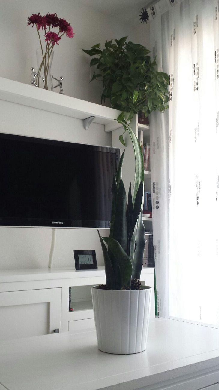 Aloe vera, una planta milagrosa - Handfie