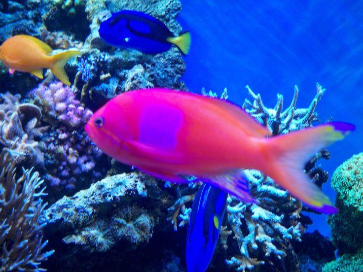 26 best davy jones 39 s locker images on pinterest coral for Davy jones locker fishing