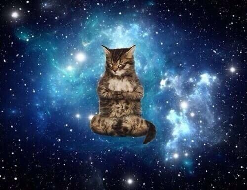 12 best space cats images on pinterest space cat cats - Space kitty wallpaper ...