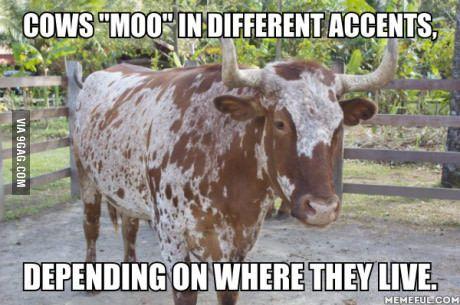 """""""WASSAMATTAWITMOO?"""" - a New Jersey cattle"""