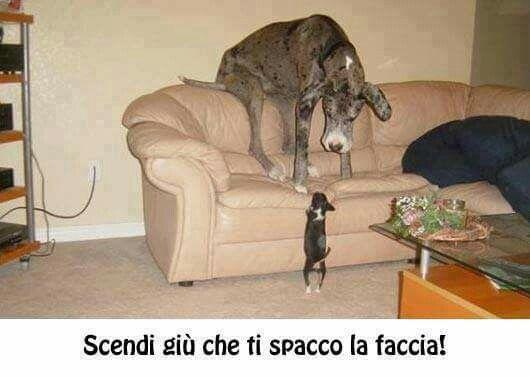 Littel dog,with big heart