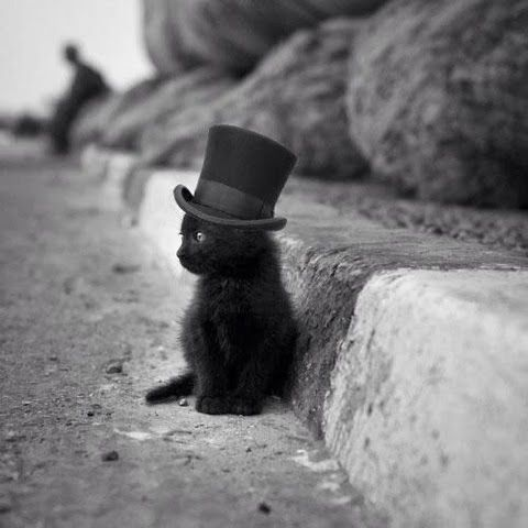 Little black kitten sitting on roadside, more amazing pics on blog......so cute and I don't even like cats