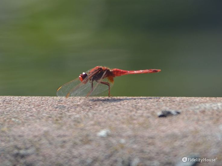 Con le ali piegate in avanti, mentre cerca cibo o forse un po' di sole, sembra voler proteggersi e chiedere un poca di privacy. Lasciamogliela!