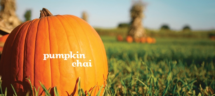 Pumpkin Chai by DavidsTea One of my favourite flavours in the fall!