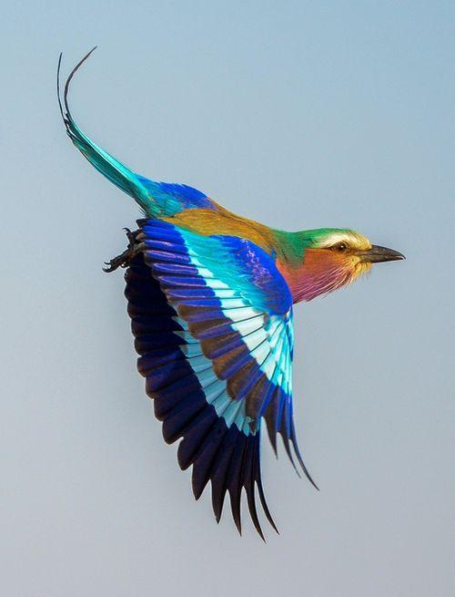 Flying rollar