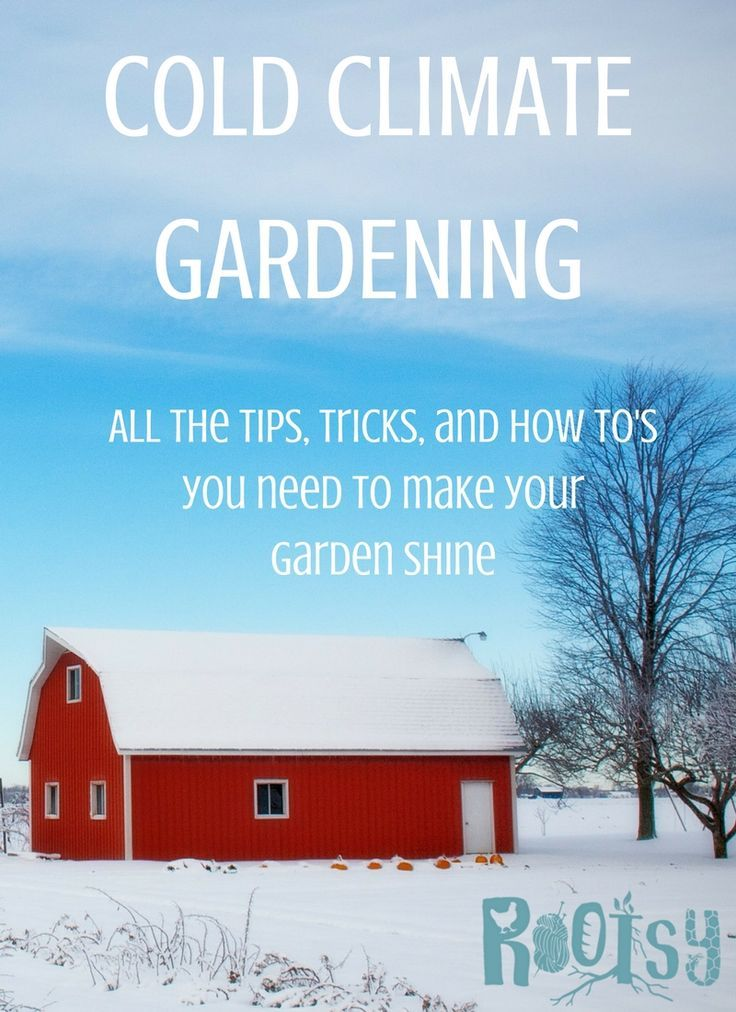 Cold Climate Garden - All the Tips, Tricks, and How To's You Need to Make Your Garden Shine