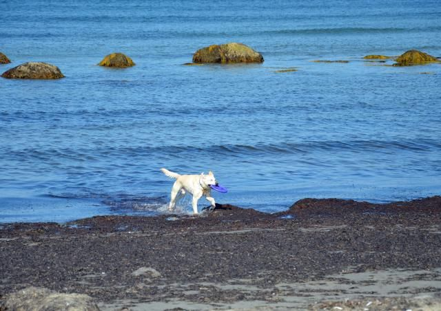 5 New England Places Dogs Love: These New England Destinations Will Make Your Dog Drool