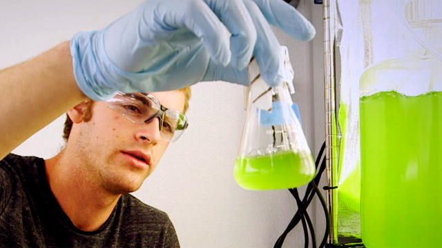 Talk about a green technology! Algae fuel could completely revolutionize the transportation industry.