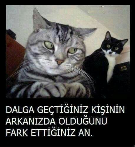 Komik kedi seni :)