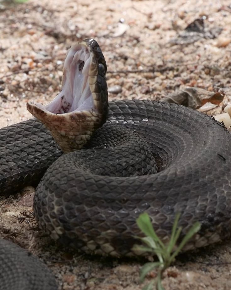 liquid fence snake repellent home depot