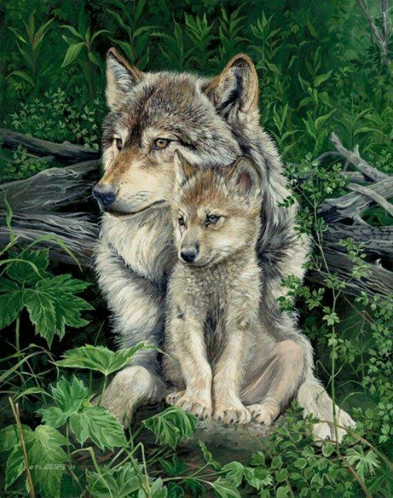 Painting of Gray wolf and pup. Artist name eligible.