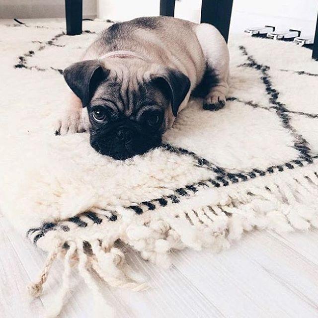 Die 25  besten ideen zu teppich machen auf pinterest ...