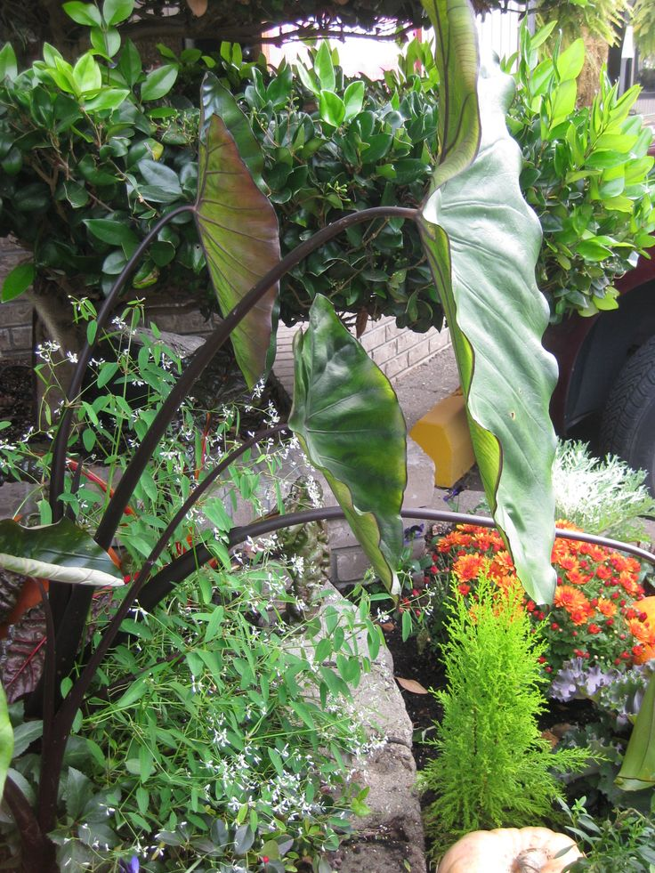 Garden Works , Burnaby
