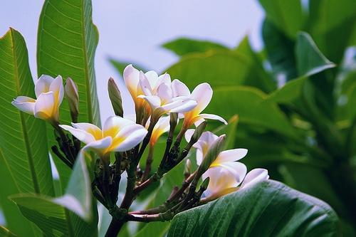 23 Best Images About Koh Samui Your Paradise On Pinterest