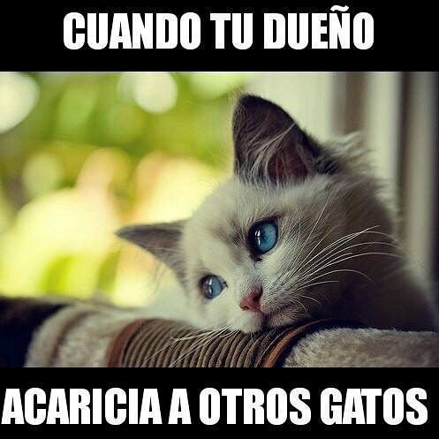 Sigue @memes.chistes.imagenes ♥ @memes.chistes.imagenes⠀ ⠀ #funny #lol #lmao #lmfao #hilarious #laugh #laughing #tweegram #fun #friends #photooftheday #friend #wacky #crazy #silly #witty #instahappy #joke #jokes #joking #epic #instagood #instafun #funnypictures #haha #humor⠀ ⠀