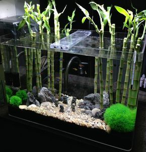 Image result for growing bamboo in aquarium #TropicalFishAquariumIdeas #AquariumDecorationsIdeas