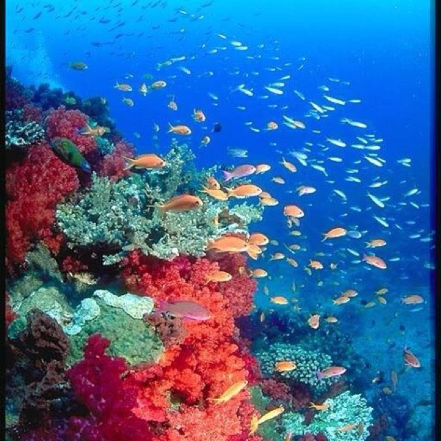 Great Barrier Reef; Largest Coral Formation In The World