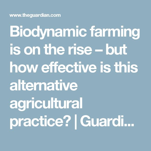 Biodynamic farming is on the rise – but how effective is this alternative agricultural practice? | Guardian Sustainable Business | The Guardian
