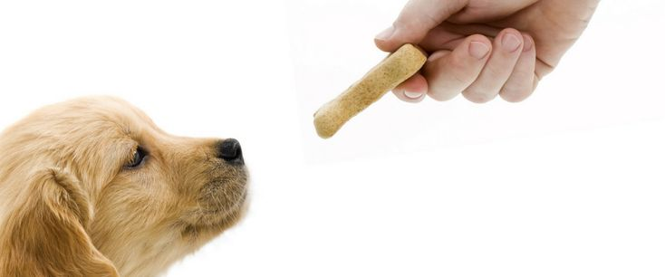 Top 10 Treats For Dogs Featuring Apples Pears And Blueberries Natural Dog Treats Food Animals Dog Treats