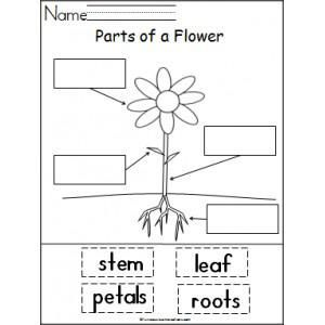 Learning About The Parts of a Plant Spring Planting