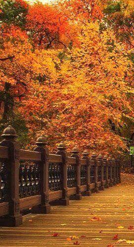 ~Beautiful trees~