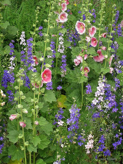 Larkspurs & Hollyhocks - two of my favorite flowers .... Corner Wall near toilet ??
