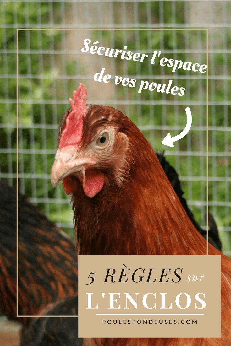 les 5 r gles respecter pour l 39 enclos de vos poules pondeuses jardin pinterest permaculture. Black Bedroom Furniture Sets. Home Design Ideas