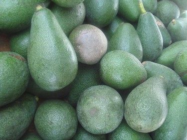 How to Ripen Avocados Fast -  Avocados are best ripened at home so you can use them just as they become soft. It can be risky to buy ones that you think are already ready at the store for two reasons.