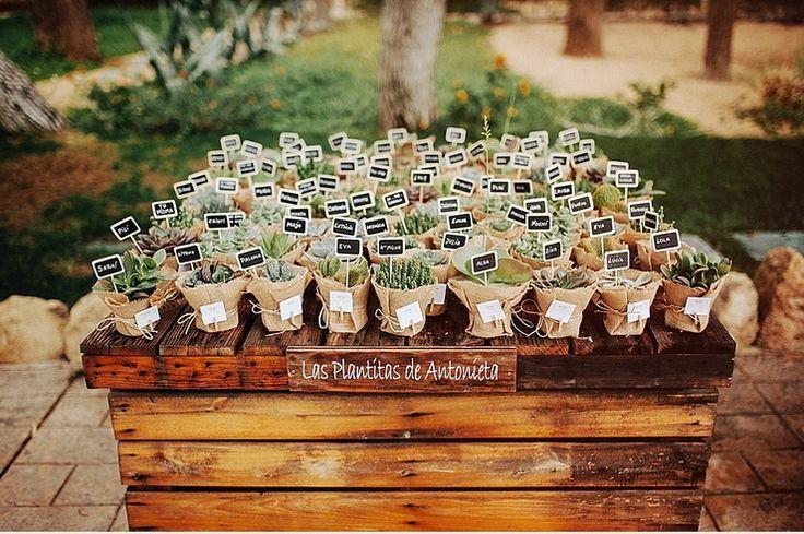macetitas con cactus y suculentas para regalar a sus invitados