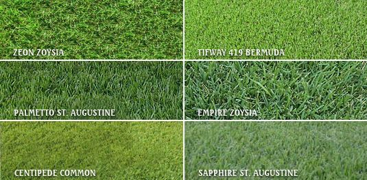 Compare Grasses Thinner Blades Lose Less Water But Some