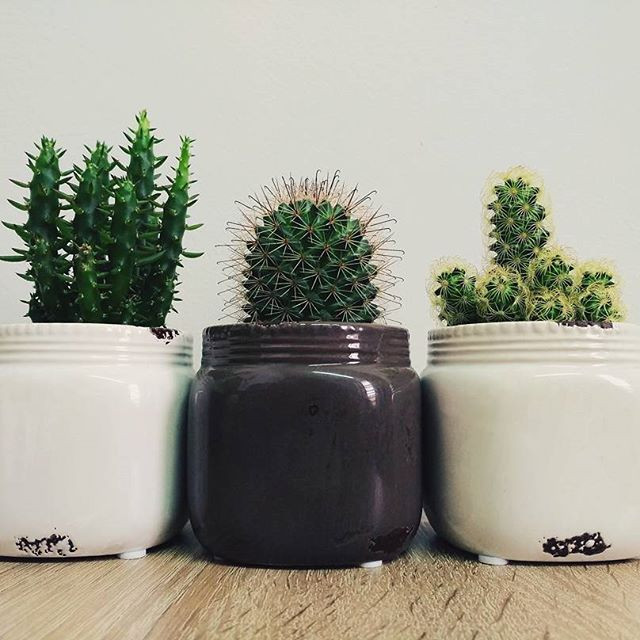 For Cactus lovers!