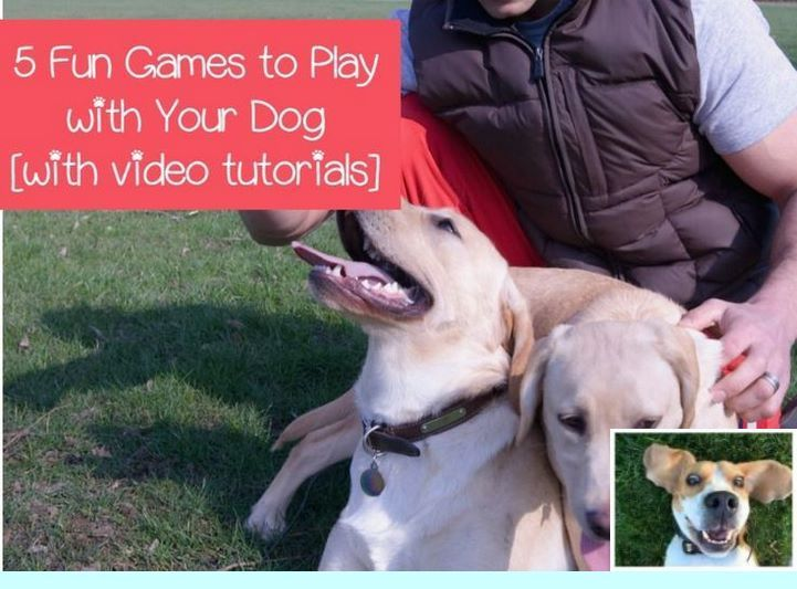 Leash Obedience Training Dogtraining And Dog Obedience Training