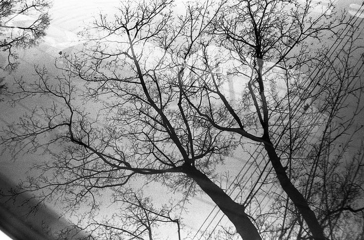 https://flic.kr/p/tLb66n | Untitled by scott williamson #film #photography #35mm #blackandwhite #tree #branches photobook: http://bit.ly/wvrlght4