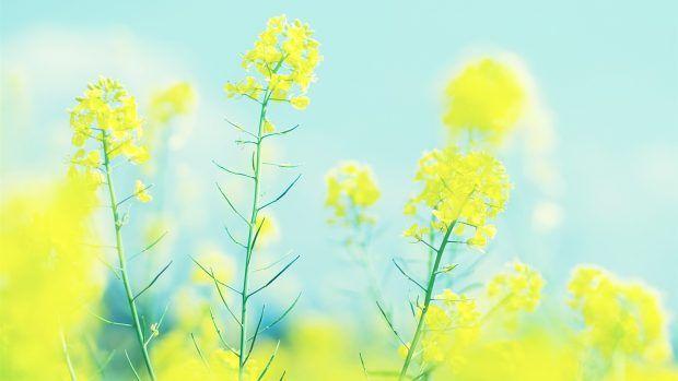 Free Bright Hd Wallpaper Download Bright Wallpaper Yellow Wallpaper Wallpaper