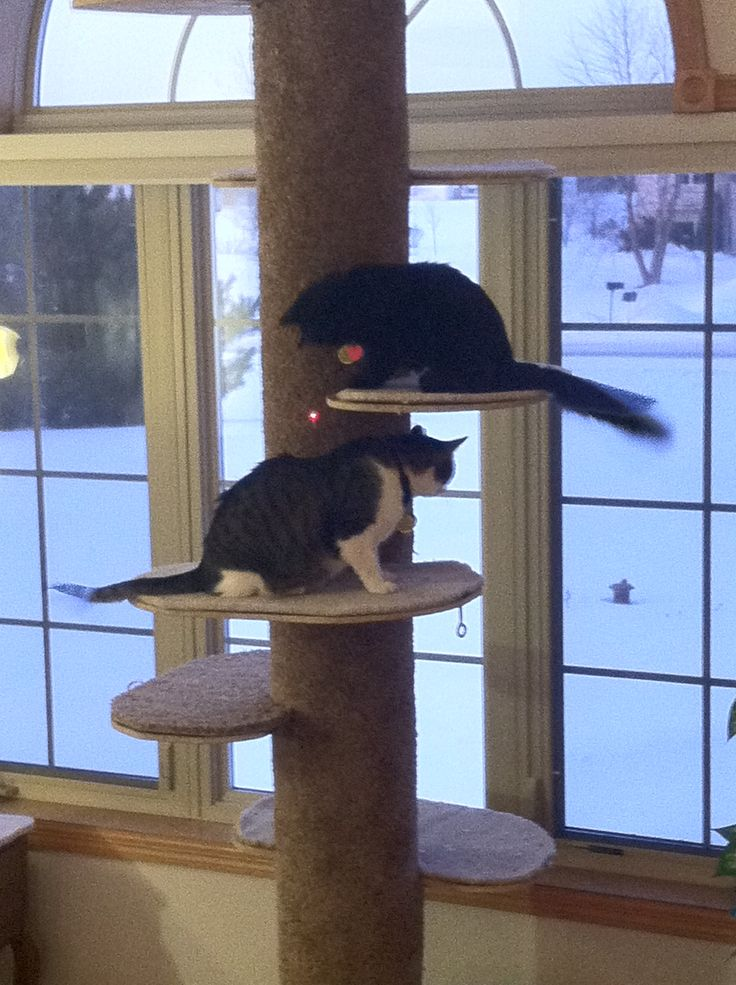 cat containment system