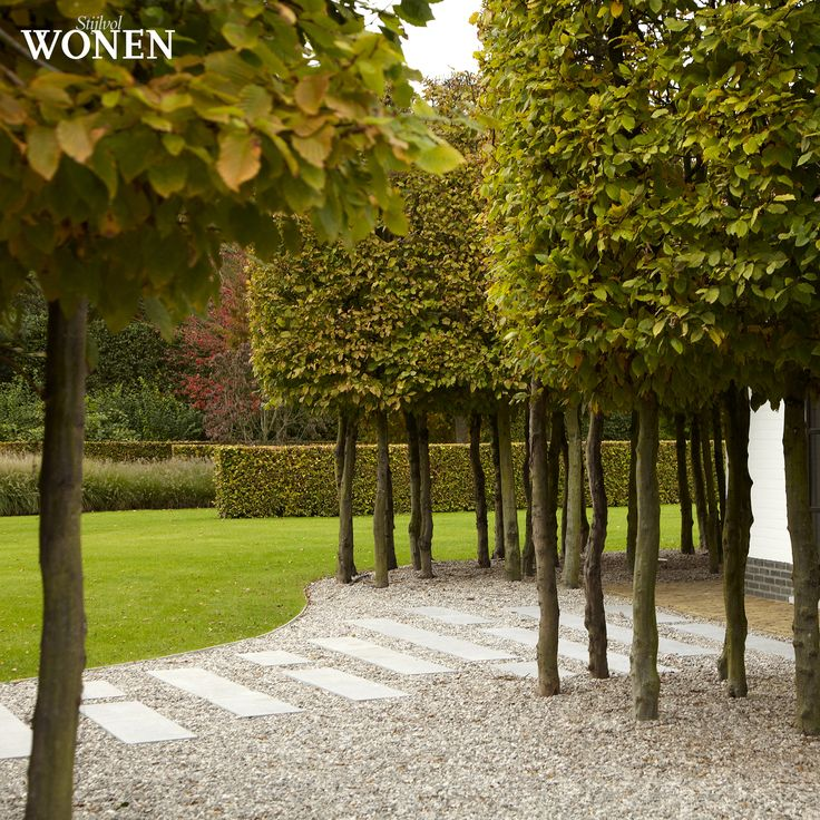 pleached hornbeam, gravel and steppers