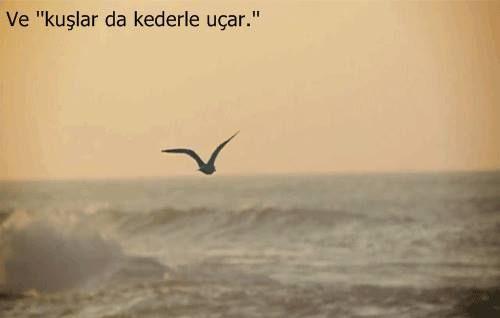 """Ve """"kuşlar da kederle uçarlar.""""  — Cahit Zarifoğlu"""