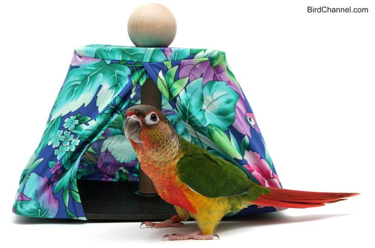 Find out about your bird's daytime and nighttime needs.