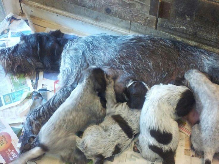 Hond britt met puppy's
