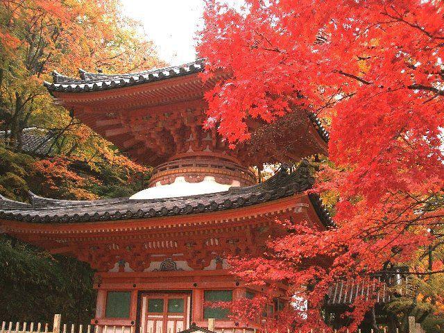 関西の紅葉は京都だけじゃない!癒される大阪の紅葉名所ランキングTOP5